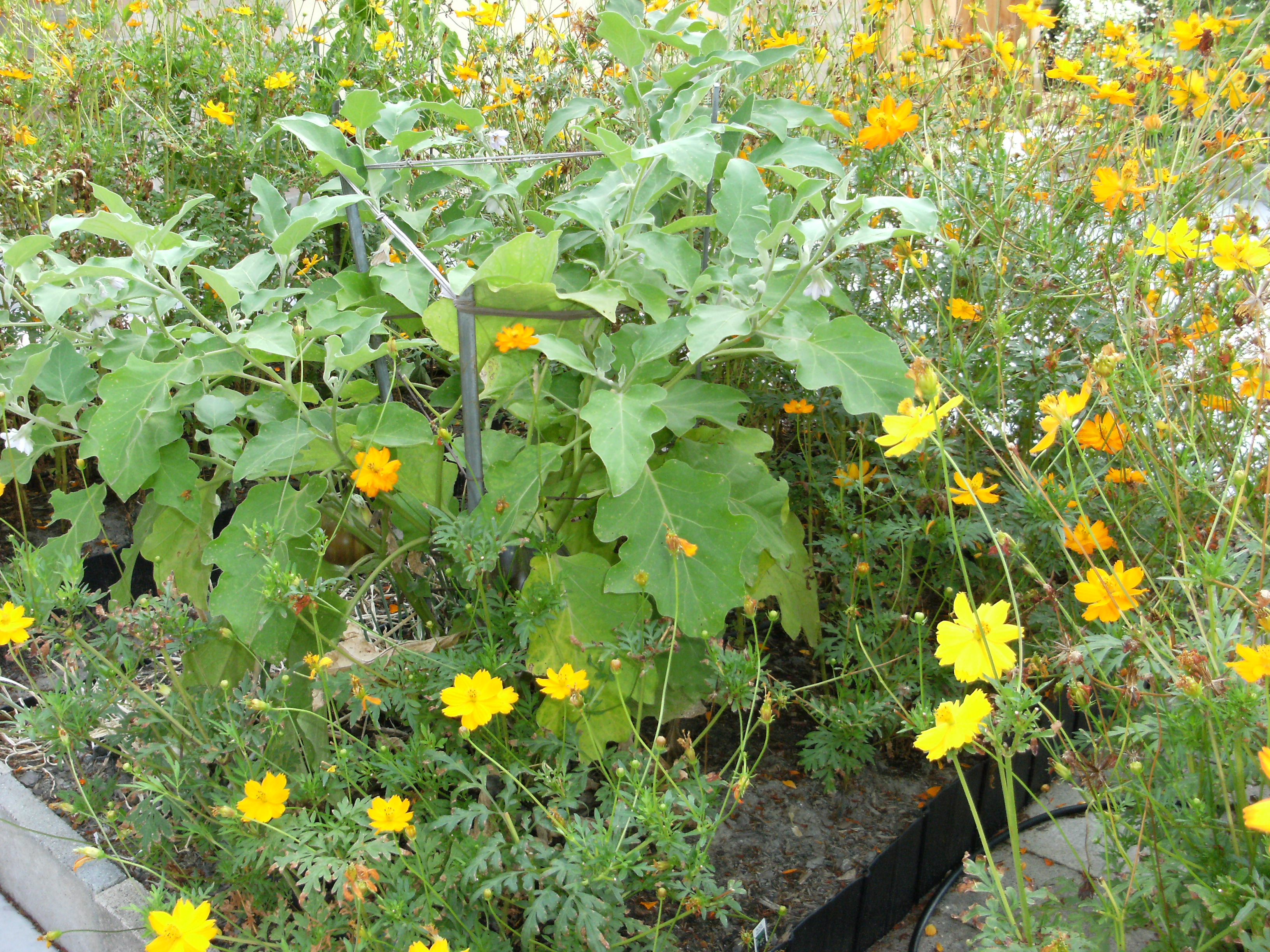 Green new construction gail of green living for Green plants for flower beds